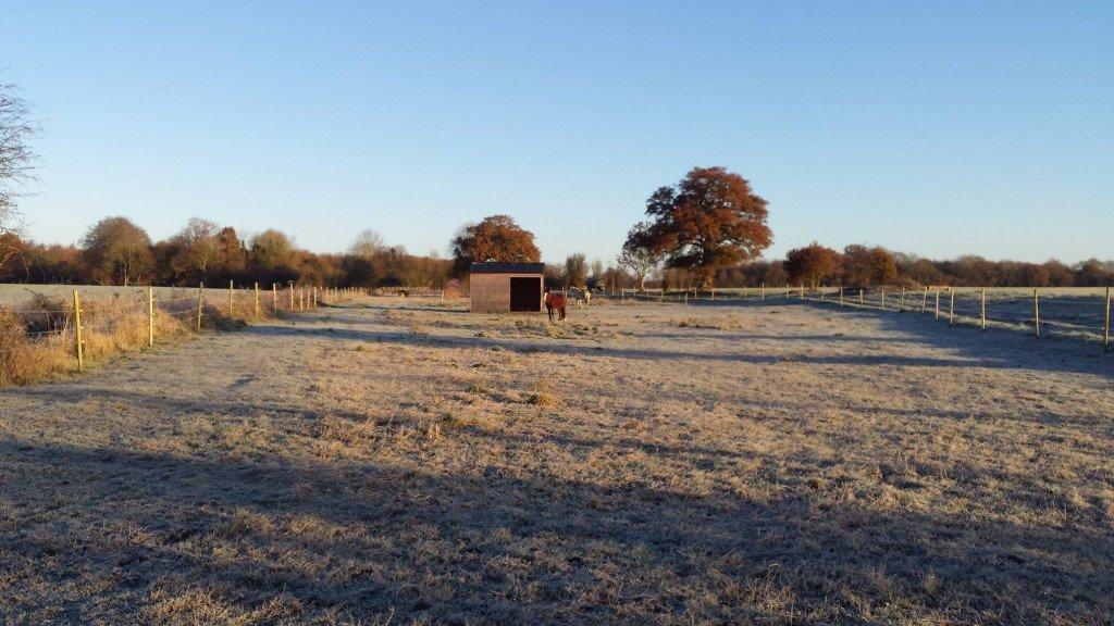Field in frost