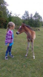 Photo courtesy Suzanne Rogers, Certified Horse Behaviourist.  www.learningaboutanimals.co.uk