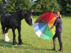 Photo: Suzanne Rogers, , IAABC certified horse behaviourist.  www.learningaboutanimals.co.uk