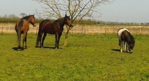 Joy, available through H4H for permanent rehome (see http://horses4homes.net/portal/en/details/joy-24612).