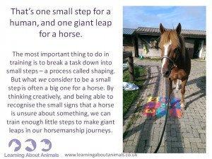 Courtesy Suzanne Rogers, certified horse behaviourist.  www.learningaboutanimals.co.uk