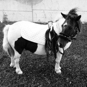 Blackberry, rehomed through Horses4Homes, January 2017