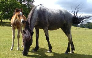 Photo: Suzanne Rogers, Certified Equine Behaviour Consultant (www.learningaboutanimals.co.uk)